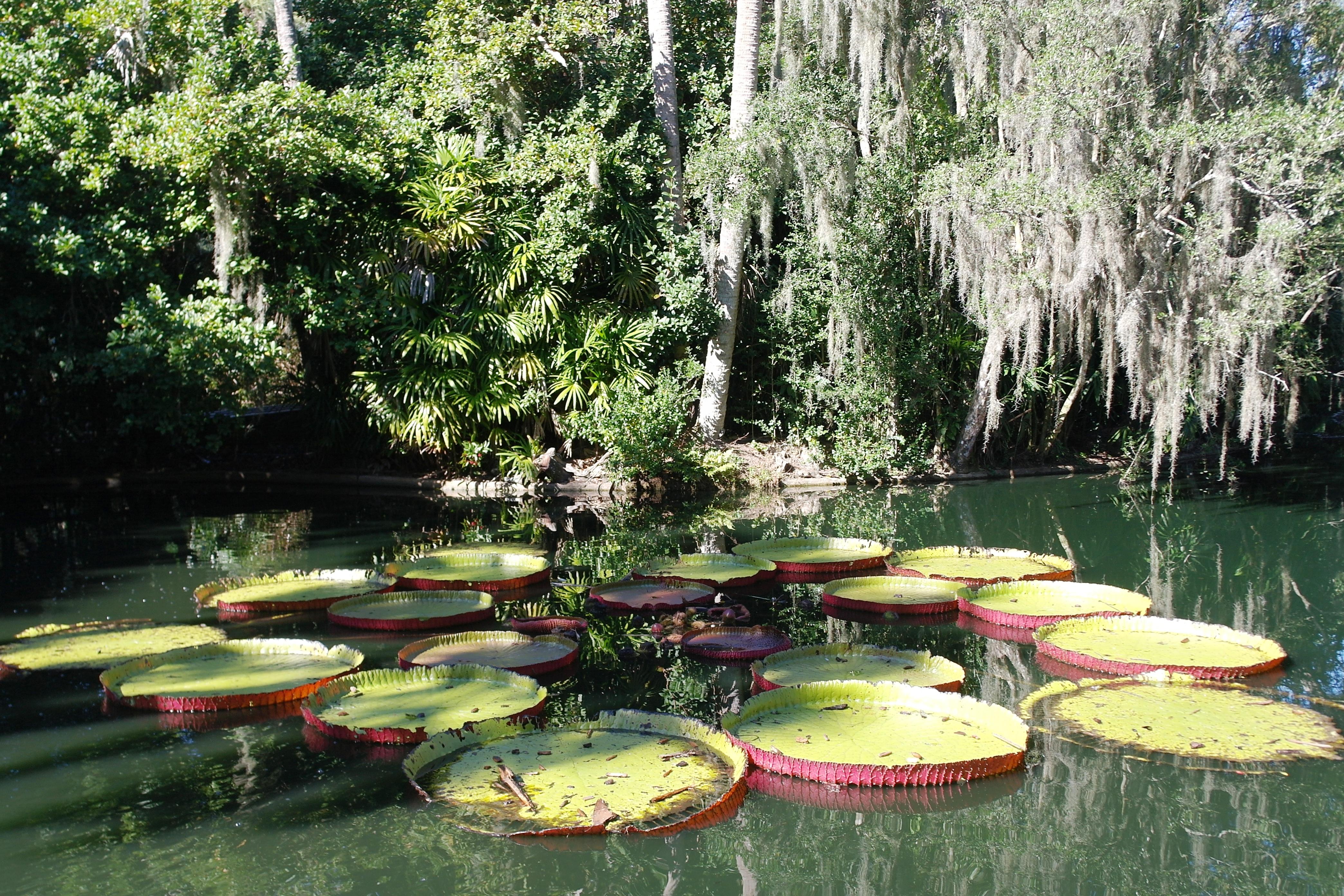 Bok Tower Showcases Floridas Lush Landscapes